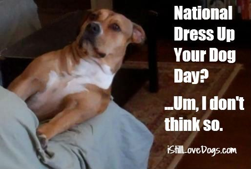Dress Up Your Dog Day