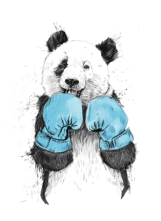 The winner panda box boxing happy black and white blue art print poster banner art illustration sport animal