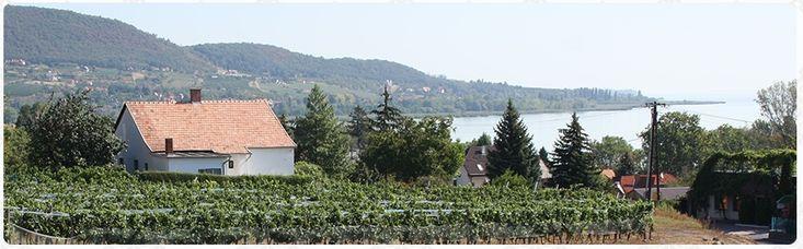 Kilátás a Balatonra. Badacsony - Lake Balaton - Hungary