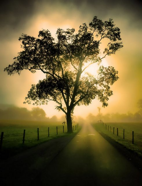 ~~The Illuminated Path ~ a foggy road at sunrise illuminates a tree, magical vanishing point landscape, Cades Cove, Tennessee by abennett23~~