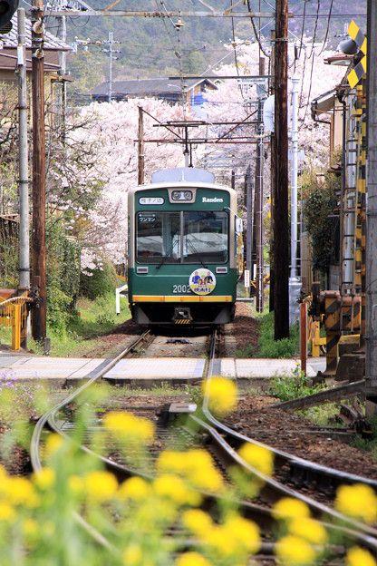 Randen railways, Kyoto, Japan 嵐電 桜のトンネル