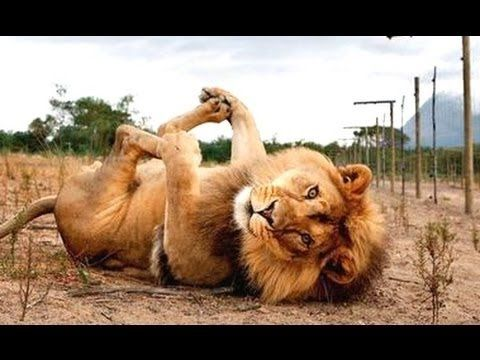Funny Animals Fails  Animals never fail to make us laugh  Super funny an...