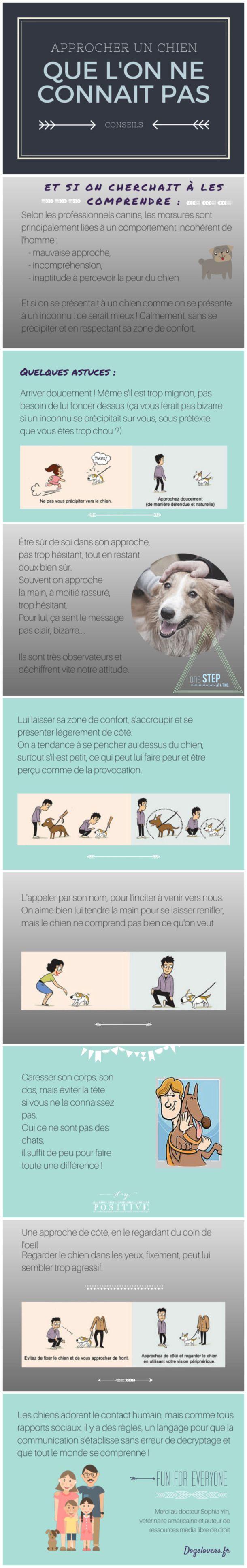approcher un chien conseil langage canin