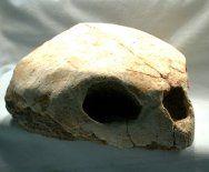 Lytoloma elegans -- Sea Turtle  Upper Cretaceous  Khouribga Plateau, Morocco