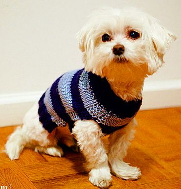50 Best Knitting Patterns For Dogs Images On Pinterest Dog