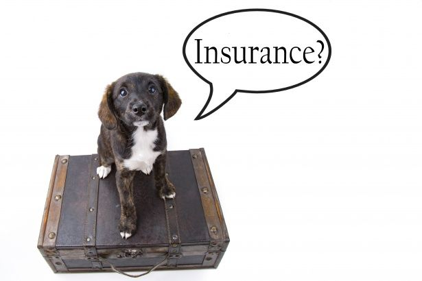 Pin By Market Survey On It And Telecommunication Market Research Pet Insurance Pet Insurance Cost Pet Travel