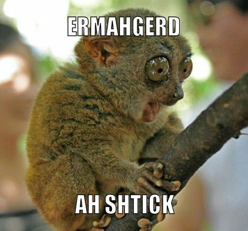 """7 Super Excited """"Ermahgerd"""" Animals - This little guy takes the cake, I think I laughed for 2 minutes straight"""