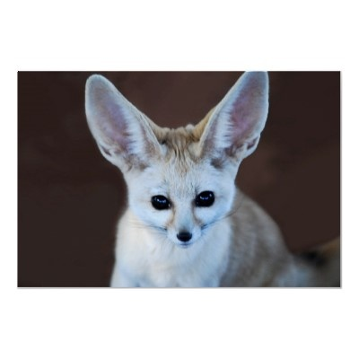 1000 images about fox on pinterest pets back pain and - Pagina da colorare fennec fox ...