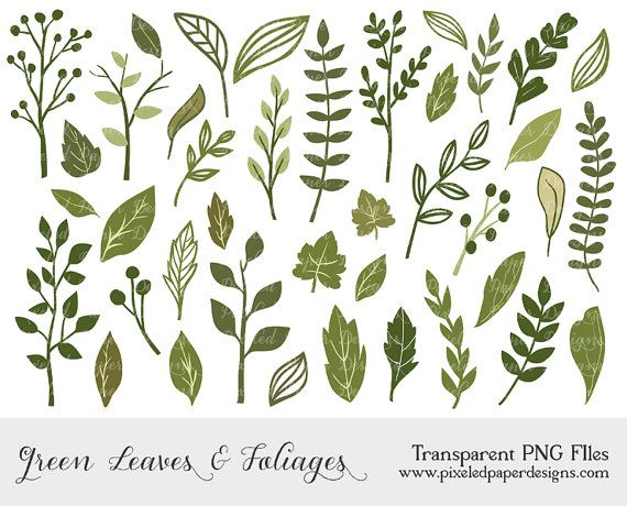 "Green leaf and foliage cliparts ""LEAF & FOLIAGE CLIPART"" Digital clipart for scrapbooking, card, invites. Green, leaf, foliage, cute."