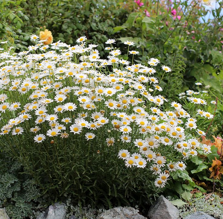 specializing in rare and unusual annual and perennial plants including cottage garden heirlooms and hard to find california native wildflowers