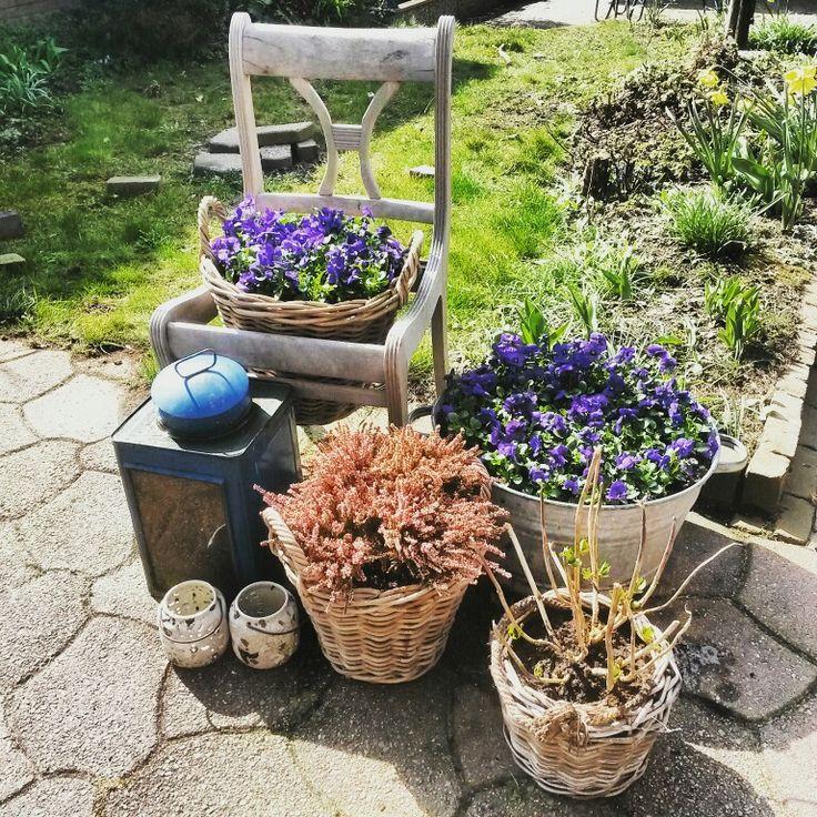 Voorjaarskriebels in de tuin