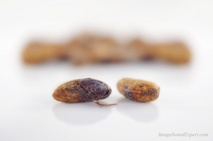 https://flic.kr/p/Fuxjvh   boabe cacao eco7   organic cocoa beans, feves de cacao biologique, boabe cacao bio, Bio-Kakaobohnen