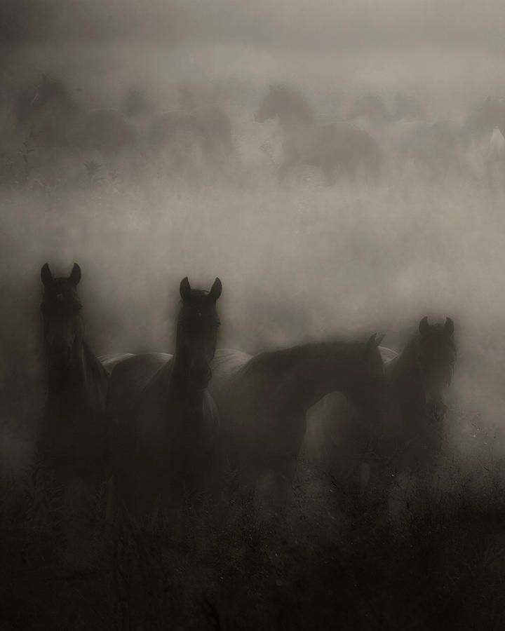Dark Horse Dreams Photograph by Ron McGinnis - Dark Horse Dreams Fine Art Prints and Posters for Sale