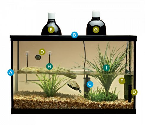 ... Aquarium Ideas, Turtle Habitat, 2015 Turtles, Turtle Tank, Aquatic