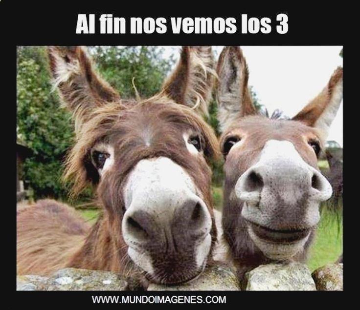 (@_@) Disfruta con lo mejor en gifs caidas, memes graciosos de the walking dead, humor grafico facebook que saen, imagenes de risa para grupos y memes judios. ➫➫ http://www.diverint.com/imagenes-divertidas-memes-espanol-dejate-barba-amor/