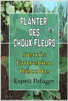Planter Cultiver Des Choux Fleurs Au Potager Semer Entretenir Et