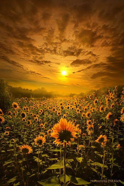 Sunset in Summer Field ~ Marvelous Nature
