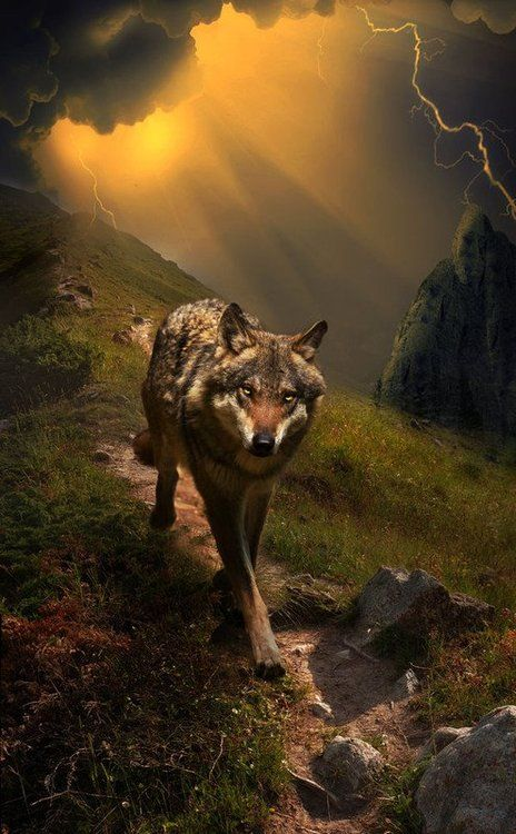 """""""Wolf is the Grand Teacher. Wolf is the sage, who after many winters upon the sacred path and seeking the ways of wisdom, returns to share new knowledge with the tribe. Wolf is both the radical and the traditional in the same breath. When the Wolf walks by you-you will remember."""" ~Robert Ghost Wolf"""