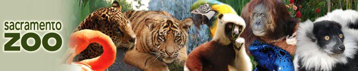 Sacramento Zoo http://www.saczoo.org