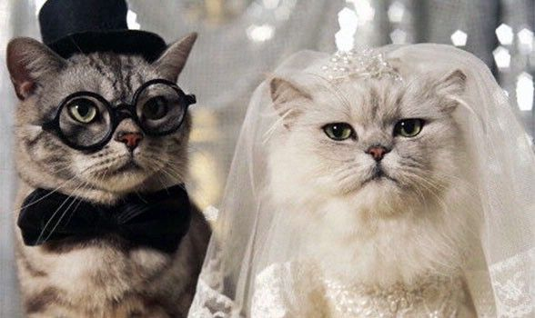 I think I would dress up my cat and dog for a fun save the date card
