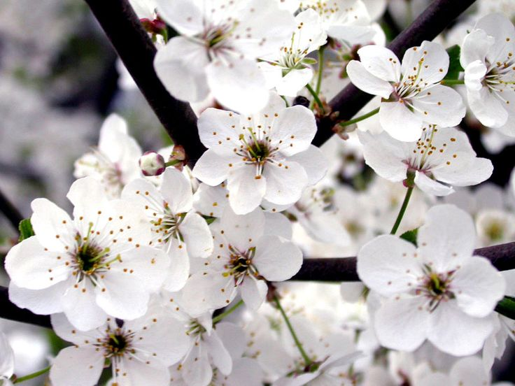 Types Of The Most Beautiful White Flowers For Your Garden