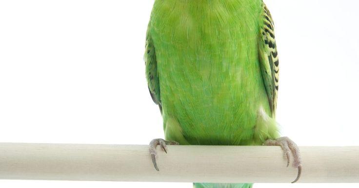 Como fazer seu poleiro de papagaio com concreto. Se você está interessado em dar ao seu papagaio um poleiro de superfície diferente mas não quer gastar dinheiro em uma loja especializada, pode fazê-lo por conta própria com concreto barato e resistente.