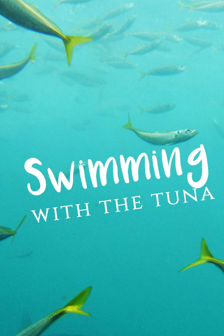 Swimming with the Fishes on my Nullarbor Traveller Tour Day 3 + 4 #sponsored   Travel on the Brain