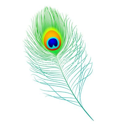 Peacock feather vector 185459 - by Alhovik on VectorStock®