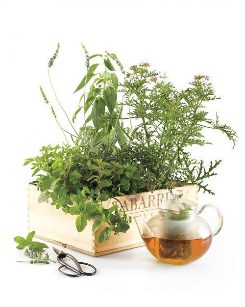 Tea Garden in a Box - Martha Stewart Home & Garden