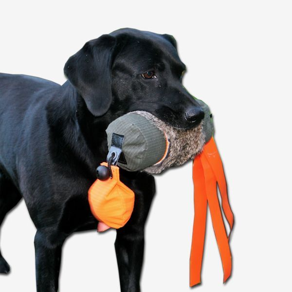 Pin On Gun Dog Training Dummies