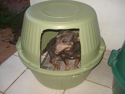 Uma forma de reutilizar bacias velhas e dar uma casinha para seu bichinho de estimação. A decoração fica ao gosto do dono (pintura, almofada, lacinho).