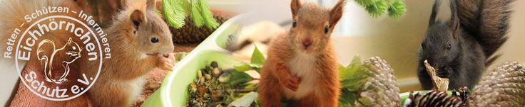 Eichhörnchen Schutz e.V. – gemeinnützig anerkannt