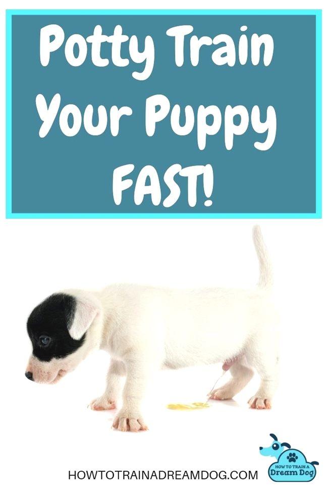 Puppy Training Commands Puppy Training Litter Box Walmart Puppy