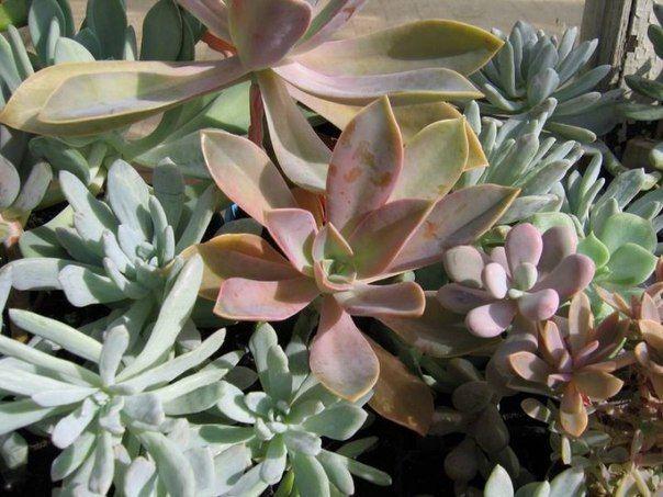 1.  Комнатные растения