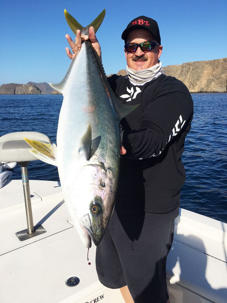 Saltwater Fishing Charter Report 10/05/2017 - Southern California swimbait star Bill Siemantel joined me today as we had absolutely wide open yellowtail fishing at the Channel Islands. We hooked 11 fish and landed 7 topped by this beautiful 21 pound yellowtail. We have the fish dialed in and have made big numbers on the yellowtail for two weeks. Just fantastic fishing and anyone that's interested in experiencing some of the best saltwater fishing in Southern California can call or text me at…
