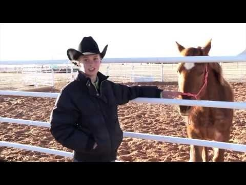 how to get horse experience calgary