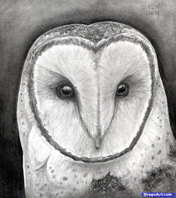Best 25 draw an owl ideas on pinterest how to do for How to draw cool creatures