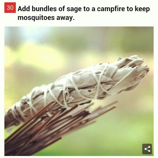 Sage keeps mosquitos away in a campfire!!