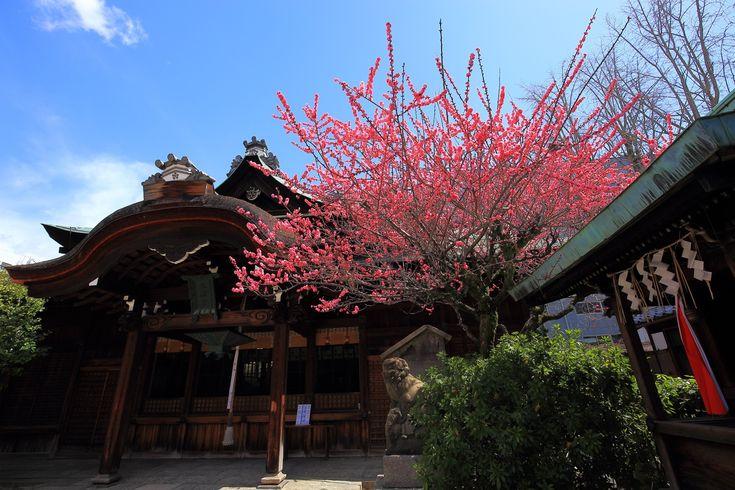 菅大臣神社の本殿と梅の花