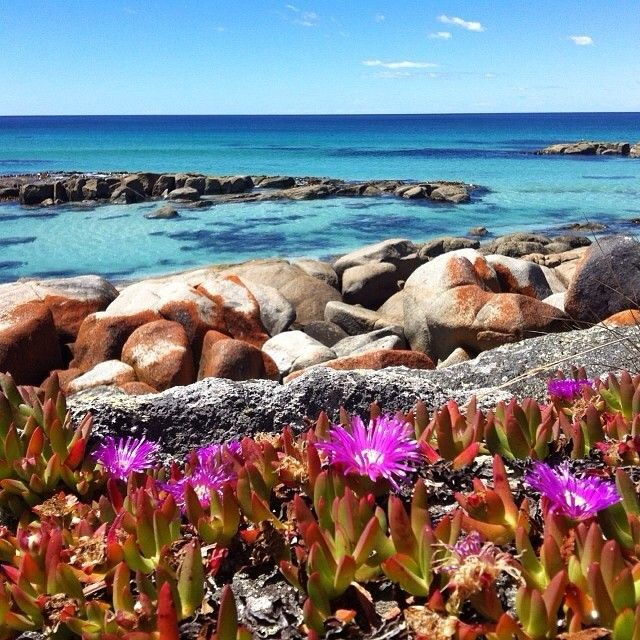 The glorious Bay of Fires on Tasmania's east coast. This area is  famous for its bright orange lichen covered rocks and rock pools with the clearest, crystal-like water . #discovertasmania #bayoffires #beach #eastcoasttas #tasmania Image Credit: kate0680