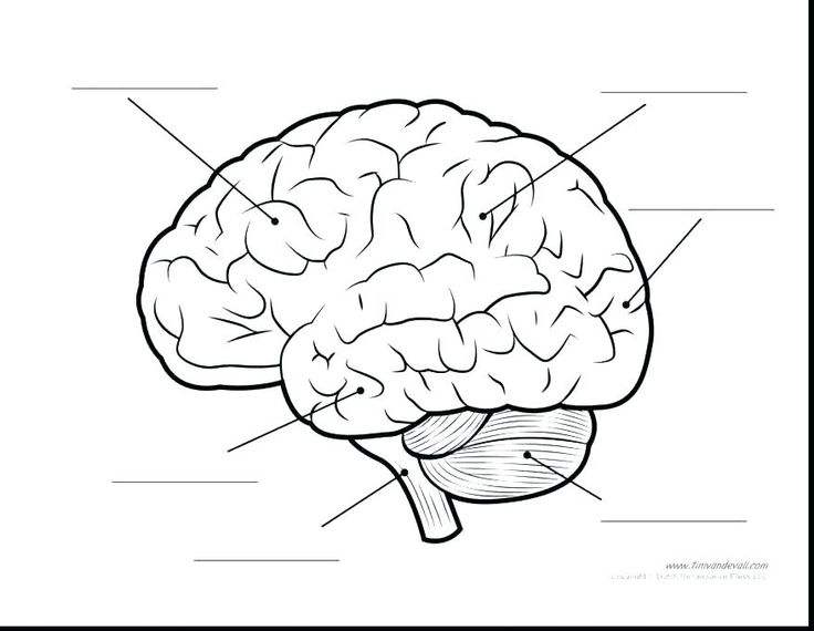 Parts Of The Brain Coloring Page parts of the brain ...