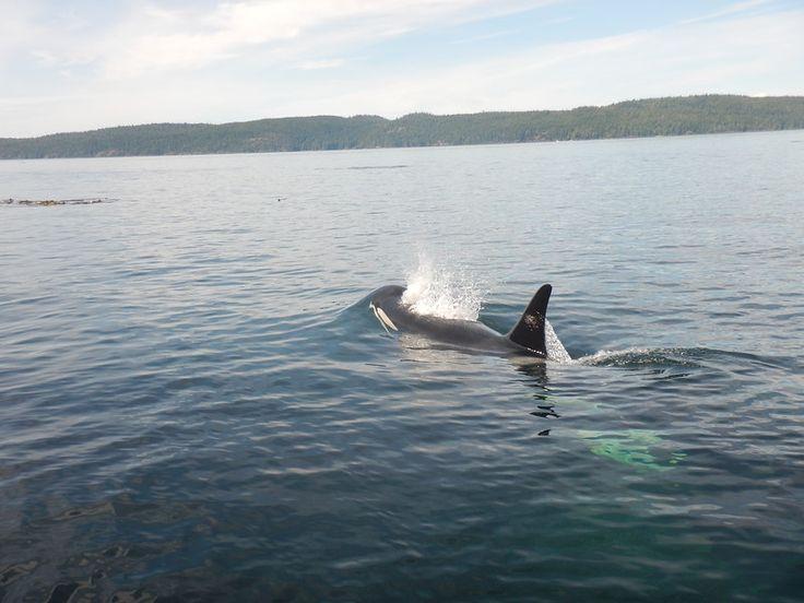 07-24-2017 Blackfish Waters