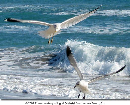 sea gulls by the sea shore