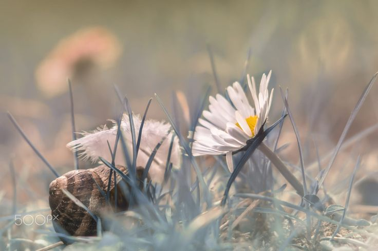"A sweet scene with a daisy and its spiral friend.  Like us on: <b><a href=""https://www.shutterstock.com/g/MaxRastello"">Shutterstock</a></b> 