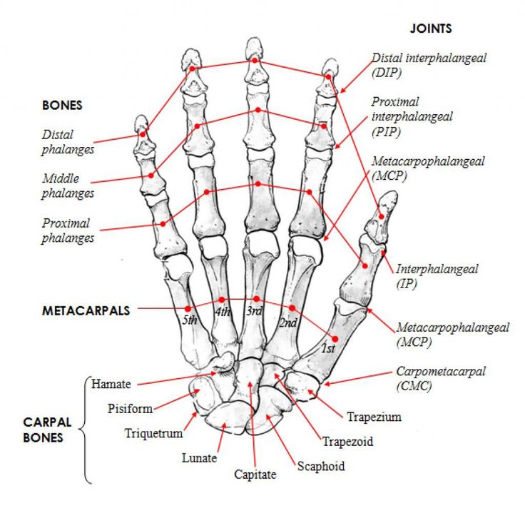 25 best Biped Reference images on Pinterest | Anatomy, Anatomy ...