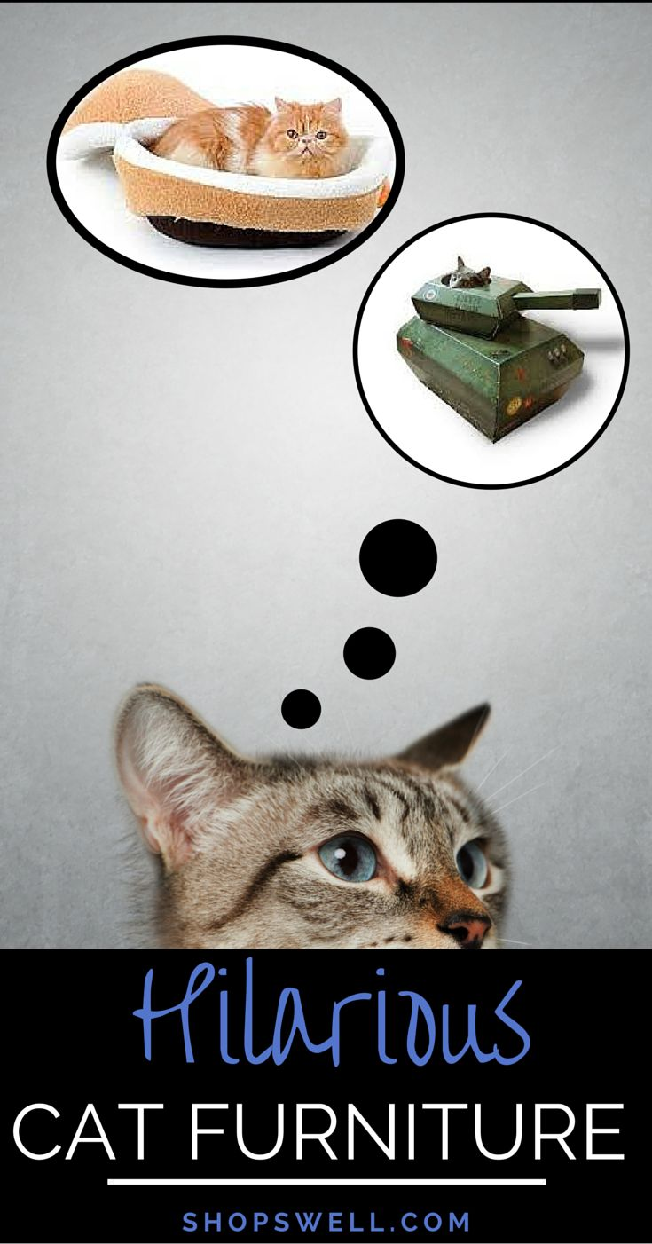 These are some fun pieces of furniture that I think any cat owner would appreciate to help keep their cats entertained and from scratching up the real furniture around the house.