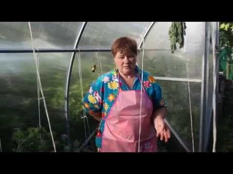 Подкормка растений. Чем подкормить помидоры, огурцы, цветы. - YouTube