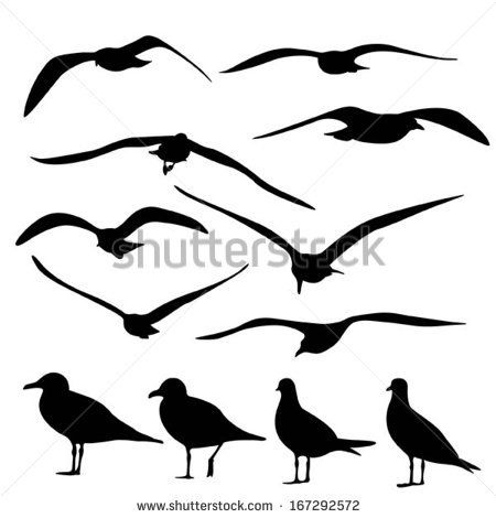 http://thumb9.shutterstock.com/display_pic_with_logo/1607156/167292572/stock-vector-gull-silhouette-vector-167292572.jpg