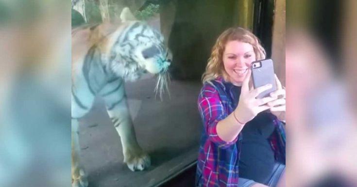 Zwangere vrouw zit naast tijger en maakt foto – Dan gebeurt er IETS dat niemand zag aankomen…