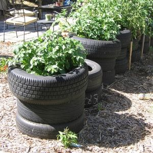 old tire potato planters